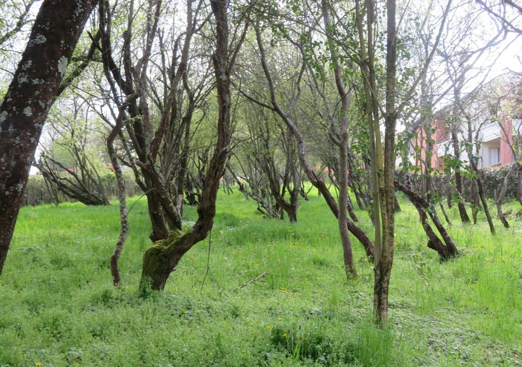 is 130 rieumes terrain a lotir jardin 4