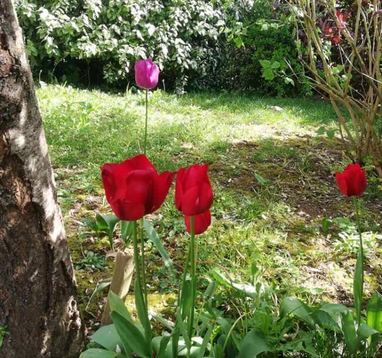 is 001 villa rieumes centre jardin 2